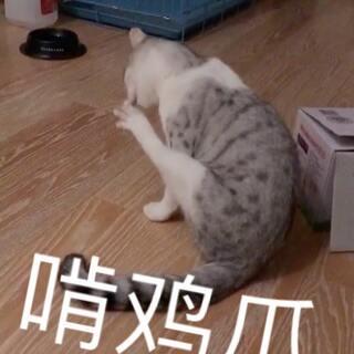 这是一个几个小视频拼起来的视频 甜筒是一只会捡玩具的猫 视频里把它