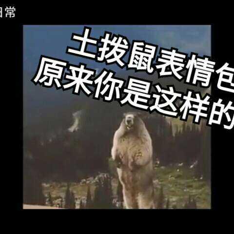 #搞笑##表情上a表情#土拨鼠源头我要找到了熊猫表情包倩女幽魂图片