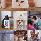 #猫咪咖啡##直播##热门# 播主微信:956326118。