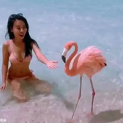 纽约迈阿密巴哈马阿鲁巴美少女加勒比海自由潜水漂流记完整版 会游泳的猪 深海马 蜥蜴岛 #旅行##潜水##女神#10月份的旅行