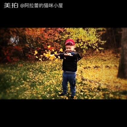 北京的秋天,真是太美了~🍁🍂🍁🍂🍁🍂#帅帅成长记##北京的秋天##宝宝#