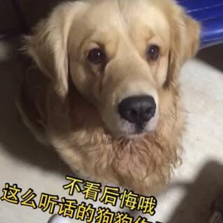 #宠物##宠物才艺秀##萌宠#这么听话 多技能的狗狗见过吗