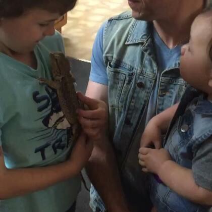 老公姪子們的新寵物😂😂😂 餵食影片,會怕不要點開喔🙈 #鬆獅蜥#