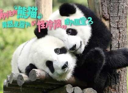 """熊猫居然是性冷淡?#萌宠# 6个问题告诉你国宝繁殖的""""小秘密""""#成都##我要上热门#"""