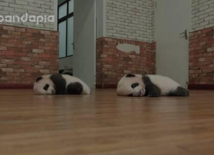 #也就才看二十遍# 芝士芝麻的午休时间,双胞胎排排睡真是萌哭啦!