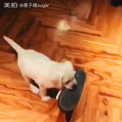 【唐子晴sugar美拍】17-11-03 15:19