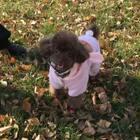 #宠物#公园里跑着一只快乐的小兔子🐰😜#带宝宝去公园玩!萌萌达#