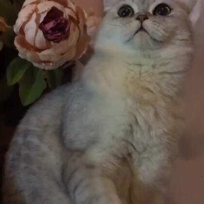 😄猫比花娇