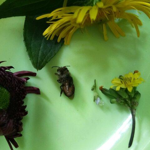 可怜的大班泥工蜜蜂恐龙立体图图片