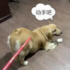 #搞笑##宠物#迪奥:意思意思就行呗,还打上瘾了啊
