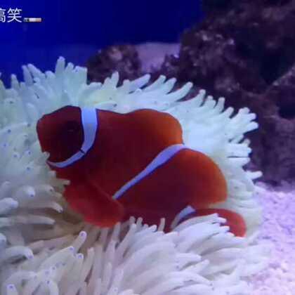 #旅游景点##北海海底世界##什么值得买#还是视频比图片直观,很可爱的海底动物们😍