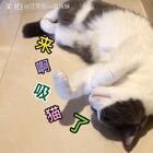 😍翻肚皮揣着小手睡觉觉💤所以 🤔呲牙是在说梦话咯?!😂#宠物##宠物独特叫声##15秒萌宠晒睡姿#