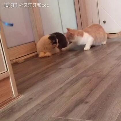 兄弟,你先别上,让我去探探风#宠物##猫咪#