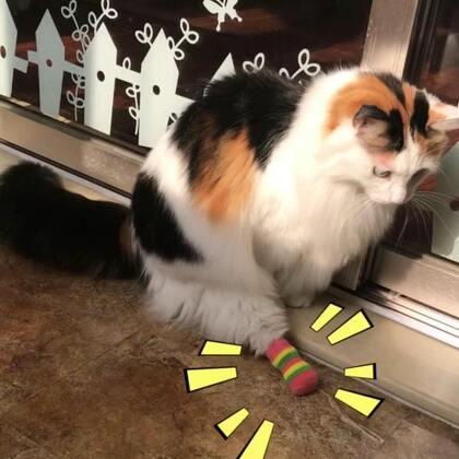 #宠物穿鞋大挑战#😂😂😂😆😆😆🤣🤣🤣太好玩了……#宠物#
