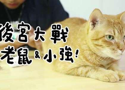 """【後宮大戰老鼠&小強】 阿瑪:「抓什麼老鼠小強!朕可是皇上!」(花絮在微博""""志銘與狸貓""""中)"""