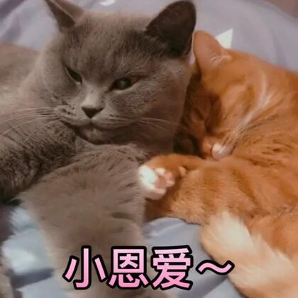 放个日常吧,冬天来了,两只小家伙相依相偎很恩爱~#日常吸猫##喵星人##宠物#