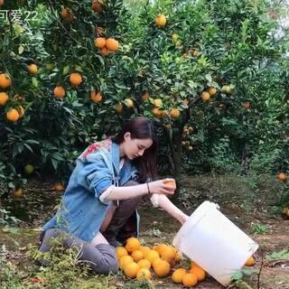 阳光下摘橙子的少女,我家橙子已经熟啦 !😝#赣南脐橙##产至自家果园的正宗赣南脐橙。#@美拍小助手