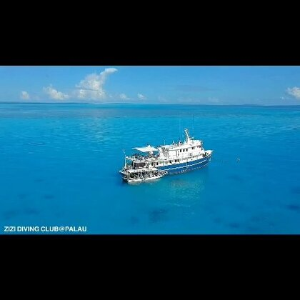 #运动##旅行##潜水#我们包的帕劳的船 在海上漂了半个月 一起潜水拍照吃吃喝喝 下船变成一家人 人生总是分分合合 别离显得格外伤感