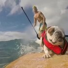 People are Awesome & The Pet Collective present Pets are Awesome #无运动,不生活#
