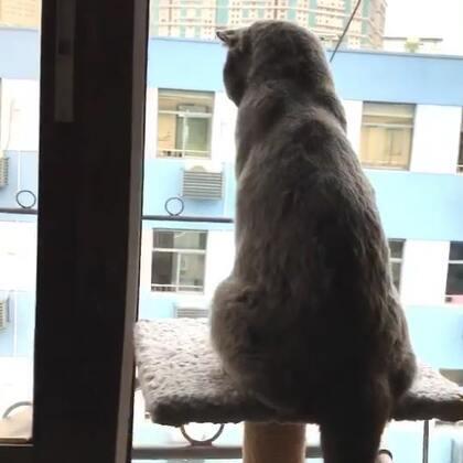 一只在家看全世界的喵星人#萌宠#