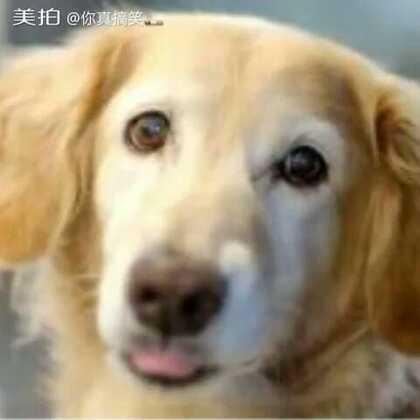 心疼这只狗狗