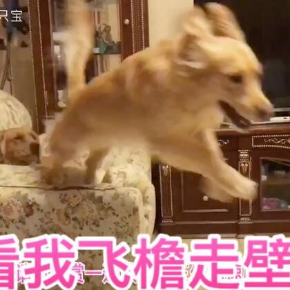 五姑娘又开始犯病了…😂😂#宠物#@美拍小助手 @宠物频道官方账号