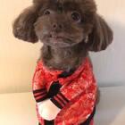 #宠物##精选#有一个姑娘是个小吃货😜😜逗宝祝大家周末快乐🌹🌹#我的宠物小精灵#
