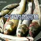 #美食##家常菜##美食作业#家常豆腐炖鱼。😘😘欢迎来围观;喜欢就点点赞加关注转发,谢谢支持@啊八厨房记8🌹🌹🌹