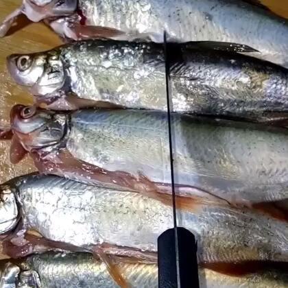 #香煎翘嘴鱼##热门##美食#喜欢双击加关注,每天分享美食教程……
