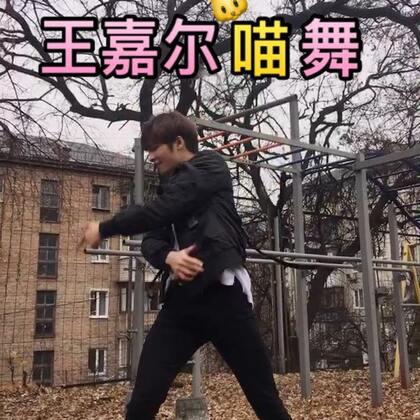 #王嘉尔喵舞#我们嘎嘎的歌怎么能没有我!来自一个🐻的喵舞!#精选#如果你觉得有狗是够炸的话不要吝啬你的🔥赞和转发🔥好吗?!#舞蹈#为王嘉尔打Call!!!💥