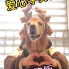#《heartbeat》#Nicole变甜美小可爱了~#精选##宠物#@美拍小助手 @宠物频道官方账号