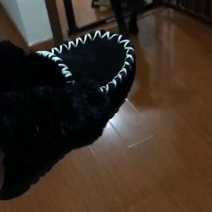 你们说这双鞋可以活多久,我今天刚穿的,被盯上了已经,还没来得及霍霍~#宠物##奶家军#