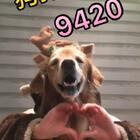 和尼扣又一次成功的配合,大家觉得好吗?☺☺@宠物频道官方账号 @美拍小助手 #9420##宠物##十万支创意舞#