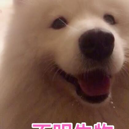 我绝对是养了一只不明生物!!!我很肯定布宝绝对不是一条狗🐶!#宠物##汪星人#