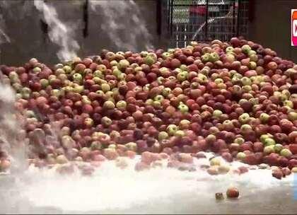 苹果汁苹果酱的生产过程,看完你还会吃吗?