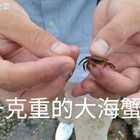 海边退潮捕到巨型海蟹😂😂😂#海边#!#退潮后留下的小蟹#