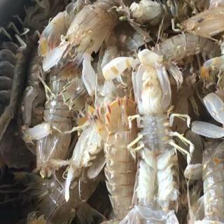 这次买的海鲜超级满意。开箱皮皮虾和螃蟹还是活的#美食##海鲜##@美拍小助手#