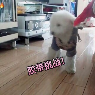 #宠物##缠胶带自拍大赛#我家的不上当啊
