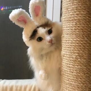 #精选#请相信你的眼睛,你看到的是一几兔几……😝😝😝#宠物#