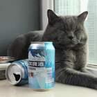 主人出门,猫咪独自在家上演绝地求生#美食##萌宠#
