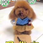 #宠物##搞笑##汪星人#写作文😄