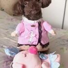 #宠物#萌萌哒小护士来查房准备给小猪🐷打针啦,这个小护士打针不疼哦😜#我的宠物小精灵#