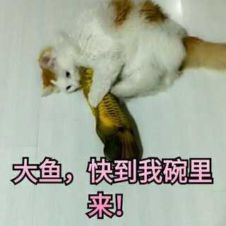 美可遇到鱼,发功了,无敌喵喵连环踢再现江湖!😂😂#宠物##李宇春流行舞##宠物小剧场#