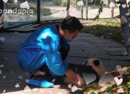 #萌团子日常#突然觉得连空气都是甜甜的粉色~快放开那只熊猫!