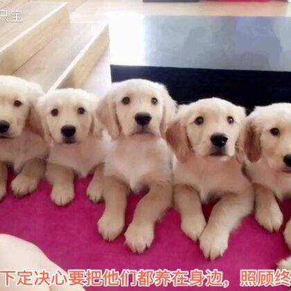 一个变两个,两个变七个,七个变八个,这个故事未完待续😉😘#宠物#@美拍小助手 @宠物频道官方账号