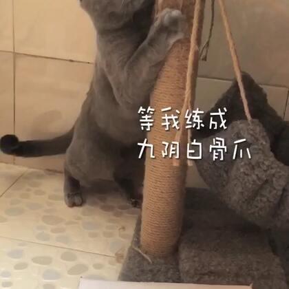 功夫猫哟,厉害哟#精选##喵星人##萌宠#