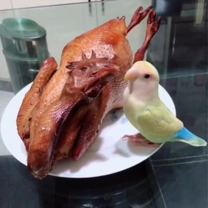 吃鸡🐔#宠物##吃秀##牡丹鹦鹉#