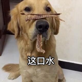 拉哥:铲屎的能不能录完再吃呢😂#宠物##汪星人#