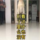 """#小布的日常生活##隐形盒子挑战# """"布说这才是真正的隐形盒子挑战"""" #宠物#"""