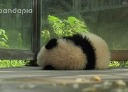 #也就才看二十遍##大话熊猫# 有一天,芝士终于展现出了体内的洪荒之力……
